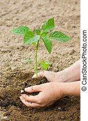 la terre, plante, femme, met