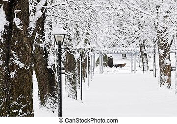 laan, in, winter, park
