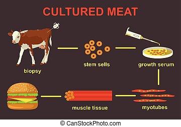 lab-grown, illustration, viande, vecteur