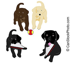 Lab puppies playing - Black, Yellow, and chocolate lab...