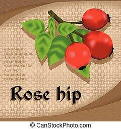 Label sticker with seasoning rose hip vector image vintage ...