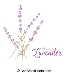 Label with lavender flowers and damask frame. Vector...