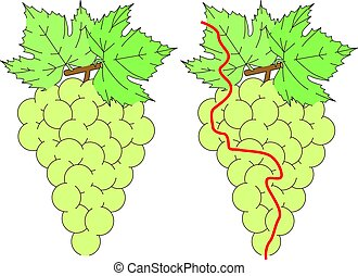 labirinto, fácil, uvas