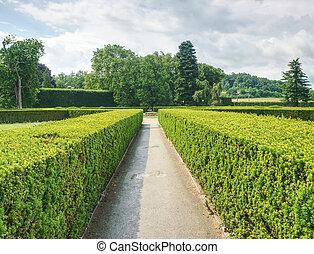 labirinto, primavera, dettaglio, buxus, nuovo, siepe, tiri, giardino