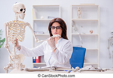 labor, csontváz, dolgozó, orvos