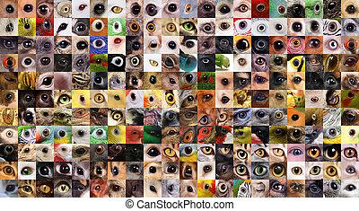 labor de retazos, de, animales, ojos