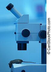 labor mikroskop, maus, unter