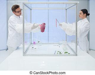 laboratório, trabalhadores, testar, um, carne, amostra