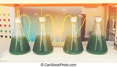 laboratórium glassware, alga, kutatás, eljárás, alatt, laboratórium, szoba, tudomány, grafikus, szűr, kép