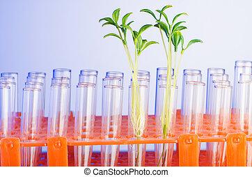 laboratorium., experiment, hos, grønne, kimplanter