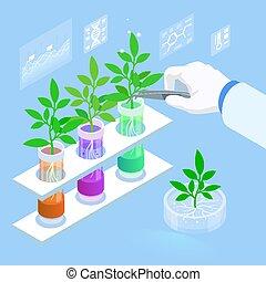 laboratorium, genetics., organische , erforschen, neu , methoden, tubes., pflanze, begriff, lebensmittel, landwirtschaftlich, betriebe, pr�fung, hydroponic, wachsen, zucht, isometrisch