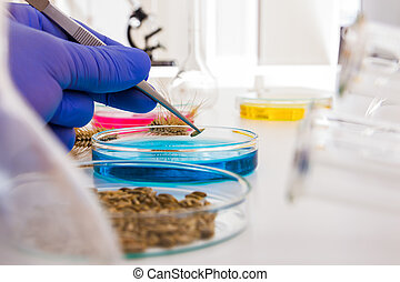 Laboratory assistant in the laboratory of of food quality. Cell culture assay to test genetically modified seed