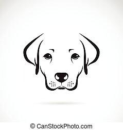 labrador, beeld, dog, vector, achtergrond, witte