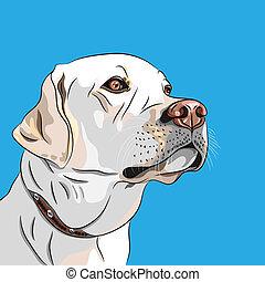 labrador, casta, perro, vector, blanco, perro cobrador