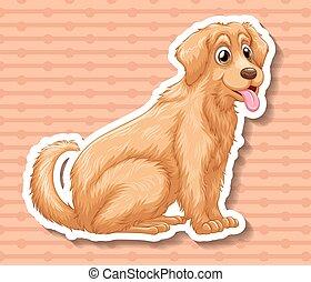 labrador, chien brun, séance