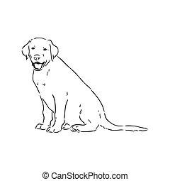 labrador, hintergrund, vektor, weißer hund, bild