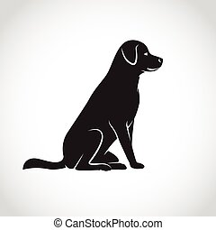 labrador, image, chien, vecteur, fond, blanc