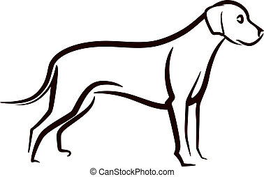labrador, immagine, cane, vettore, fondo, bianco