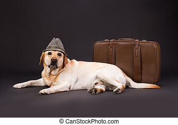 Labrador in hat near brown suitcase.