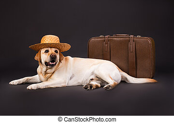 Labrador in straw hat and brown suitcase.