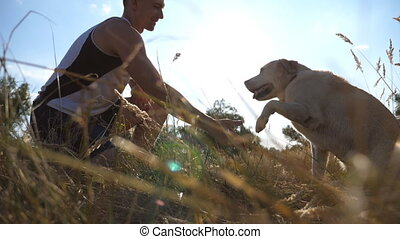 Labrador or gold retriever sitting on green grass and giving...