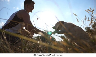 Labrador or gold retriever sitting on green grass and giving paw to his owner. Dog training outdoors. Sun rays at background. Slow motion. Close up
