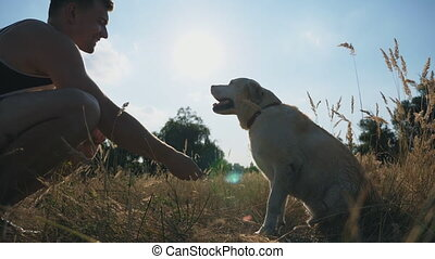 Labrador or golden retriever sits on grass and gives paw to...