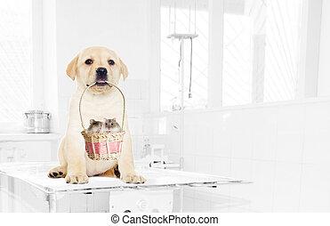 Labrador puppy holding a basket