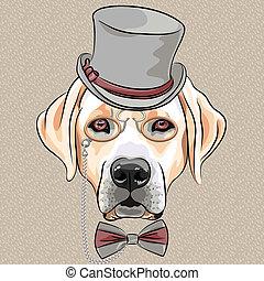 labrador, raça, cão, vetorial, hipster, sério, caricatura, retriever
