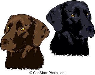 Labrador Retriever - Chocolate and Black Lab illustrations