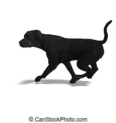 Labrador Retriever Dog. 3D rendering with clipping path and ...