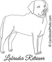 Labrador retriever dog outline