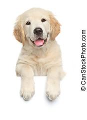 Labrador retriever puppy above banner - Happy Labrador...