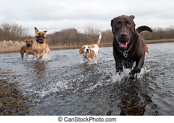 labradorhundapportierhund, und, friends
