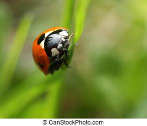 Labybug on green grass