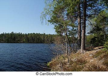lac, arbres, pin