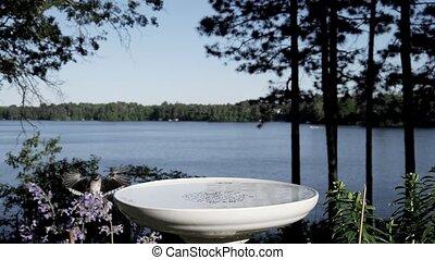 lac, atterrissage, bain, arrière-plan., dramatique, marques, oiseau