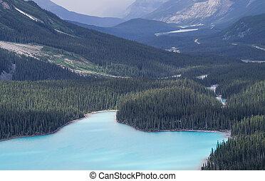 lac bleu, dans, a, forêt