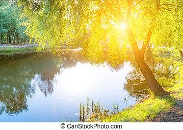 lac bleu, et, arbre vert