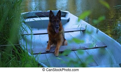 lac, boat., berger, chien, allemand