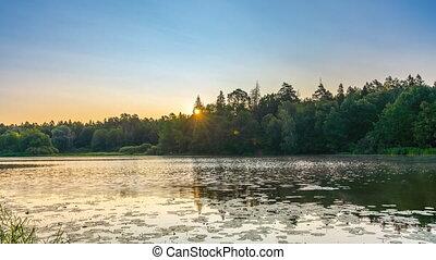 lac, brumeux, sur, levers de soleil, forêt, timelapse
