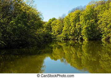 lac, dans, forêt verte