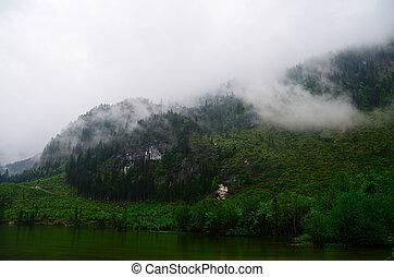 lac, dans, vert, nature, à, brouillard