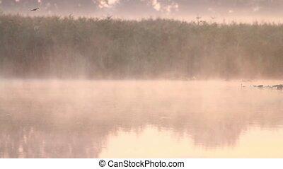 lac, oiseaux, survoler, brumeux