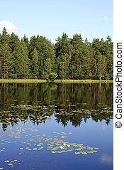 lac, réflexions, forêt