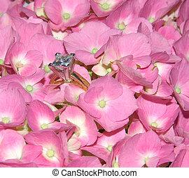 lacecap, hortensia, diamant