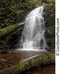 Lacey Waterfall in the Forest - Fern Rock Falls in Oregon ...