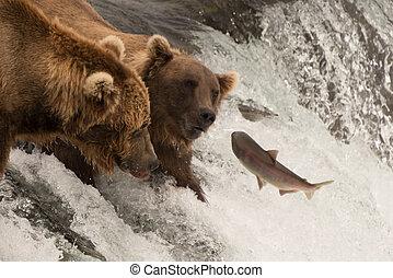 lachs, sprünge, gegen, zwei bären, auf, wasserfall