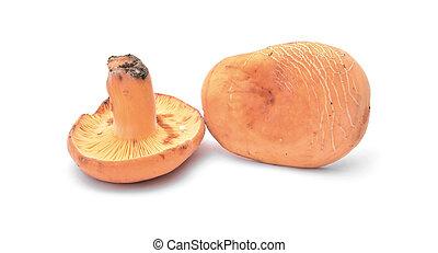 lactarius volemus mushroom isolated on white
