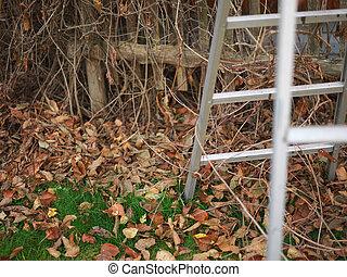 ladder in a garden
